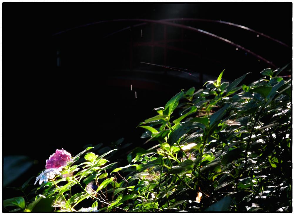 「雨の日の翌朝」小江戸川越12