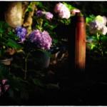 野に咲く花の様に