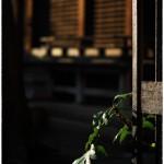「春の足音」小江戸川越94