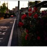 小江戸川越散歩142
