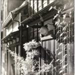 「蜘蛛の巣の夢」 小江戸川越散歩144