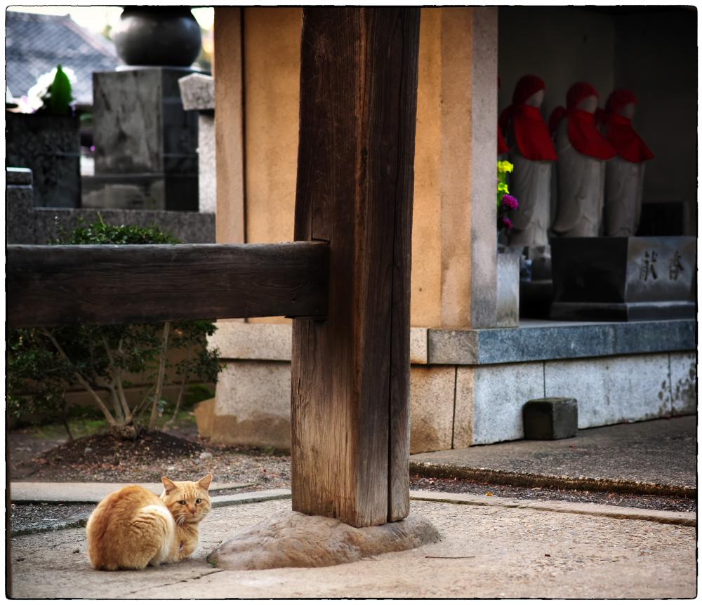 「桜の季節」小江戸川越散歩167