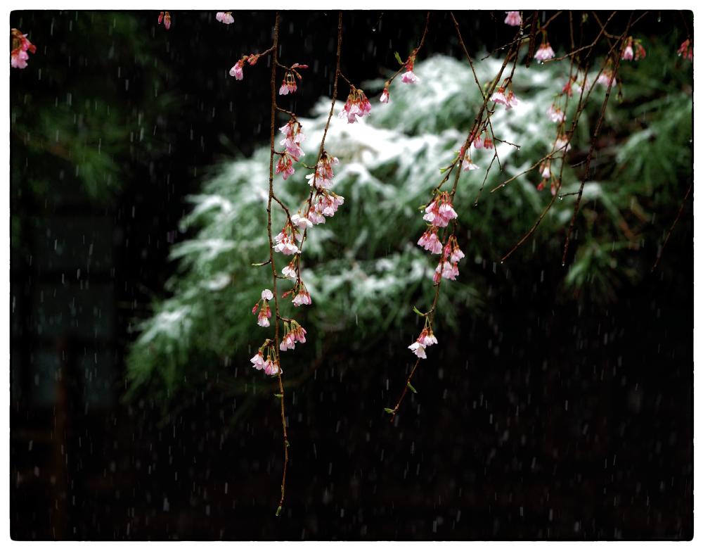 「小さな季節感」小江戸川越散歩165
