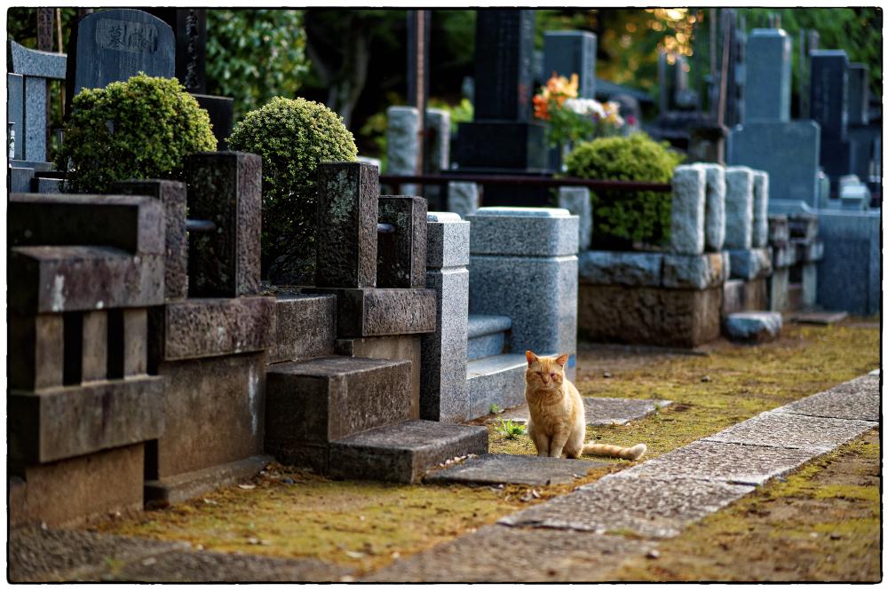 「ふとしたきっかけ」小江戸川越散歩174