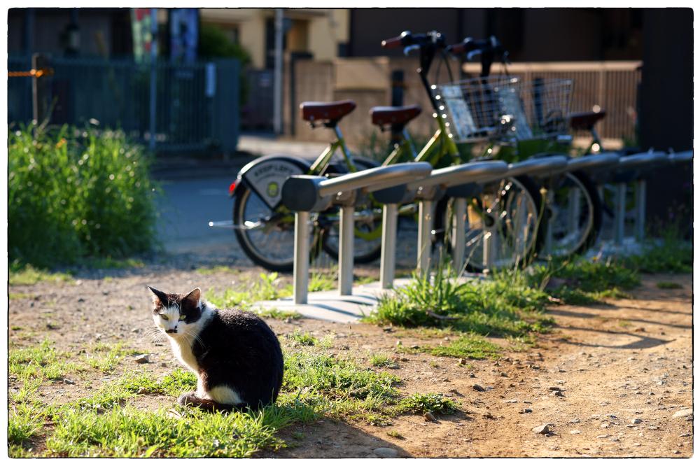 「そういえば・・。」 小江戸川越散歩176